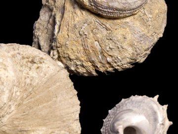 Collezione Stoppani: un patrimonio ritrovato